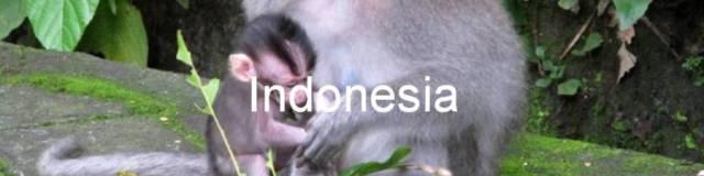 Indonesia. 0. Mono con su cría en el Bosque de monos. Monkey Forest, Ubud, Bali.
