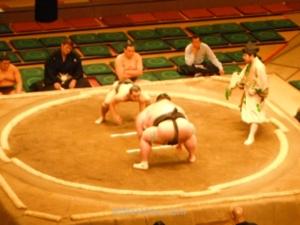 Combate Sumo