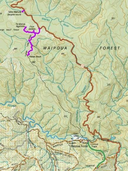 Mapa bosque Waipoua