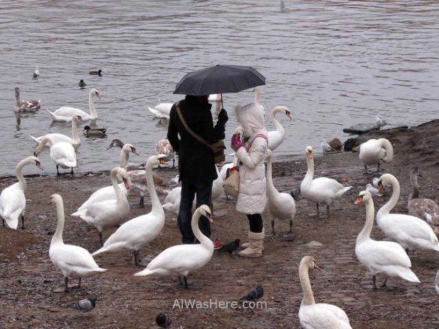 Praga Mala Strana Prague cisnes swans