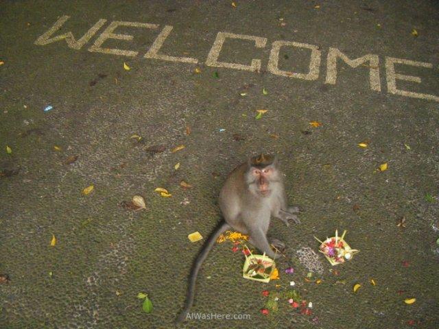 Mono bienvenida