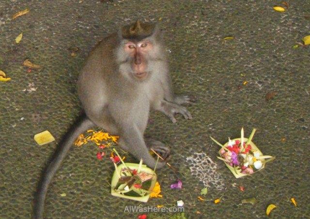 Canang sari y mono