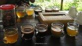 Tres variedades de Kopi Luwak y otras dos infusiones