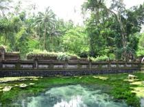 Piscina termal junto a la selva