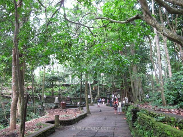 Bosque monos Ubud bali Monkey Forest