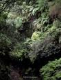 Los Tilos, isla de La Palma