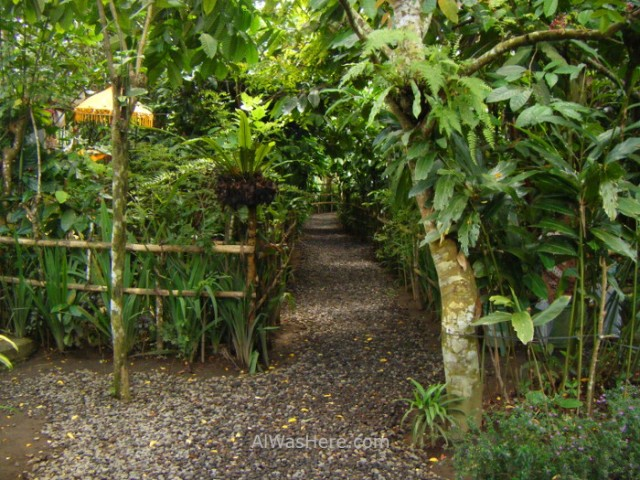Kopi Luwak cafe balinese coffee plantacion farm plantation