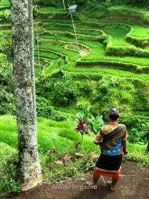 Guía local contemplando las terrazas de Tegallalang, Ubud, Bali