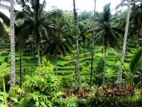 Vista general de las terrazas de Tegallalang