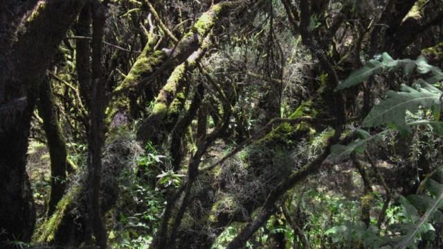 troncos-cubiertos-de-musgo