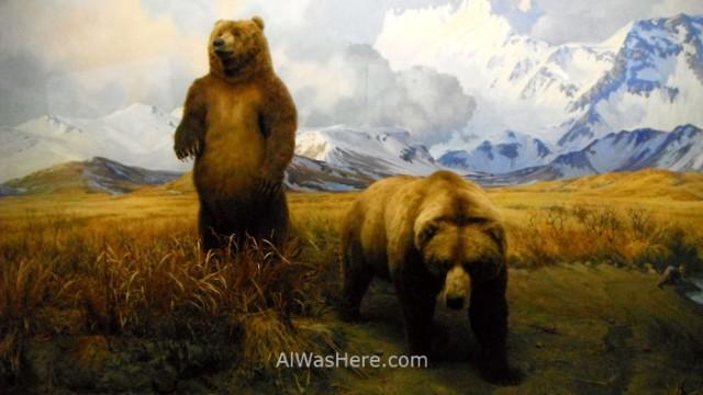 museo-americano-de-historia-natural-nueva-york-museum-history-new-8