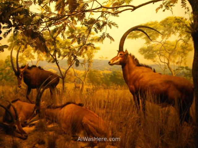 museo-americano-de-historia-natural-nueva-york-museum-history-new