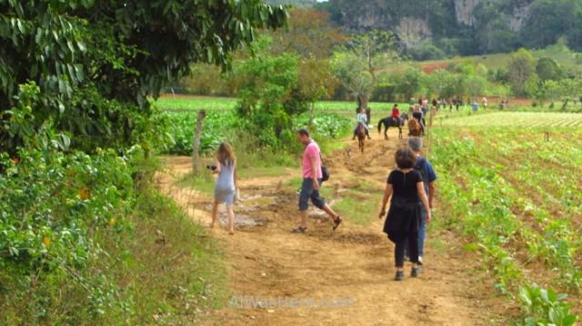 Viñales 2. Turistas caminando sin guía en el Valle de Viñales, Cuba. Tourist walking without guide, viñales Valley, Cuba