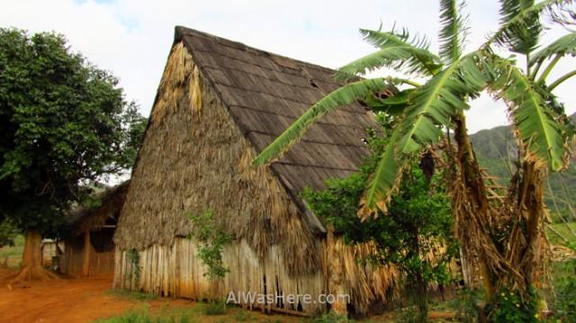 Viñales 9. Secadero de tabaco en el Valle de Viñales, Cuba. Tabacco drying in Vinales Valley
