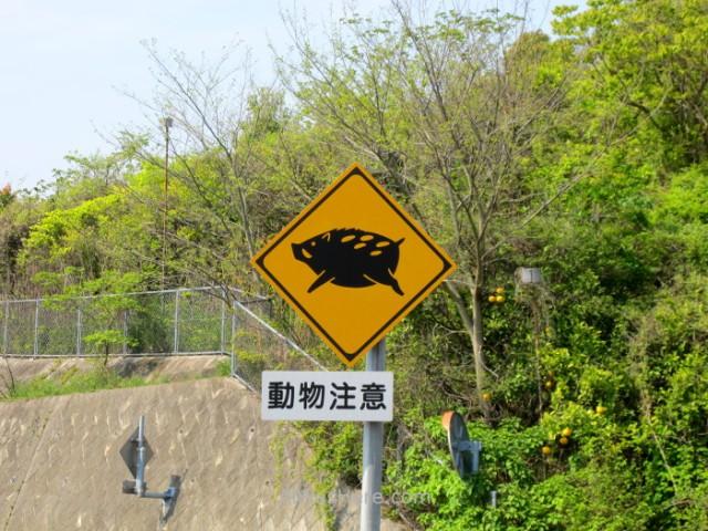 Shimanami Kaido 8.2. Señal de trafico jabalies Japon. trafic signal wild boars Japan
