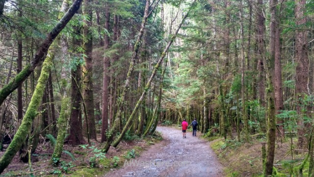 Juan de fuca 1. Botanical Beach. Marine Trail, Isla de Vancouver, Columbia britanica, Canada. Island, British.