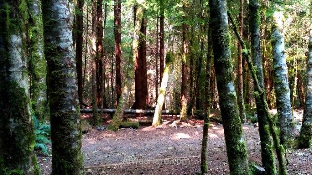 JUAN DE FUCA 33. Little Kuitshe campsite, Marine Trail, Isla de Vancouver, Columbia Britanica, Canada. British, Island. (2)