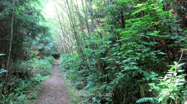 JUAN DE FUCA 35. Cerca de Parkinson Creek Marine Trail, Isla de Vancouver, Columbia Britanica, Canada. British, Island.