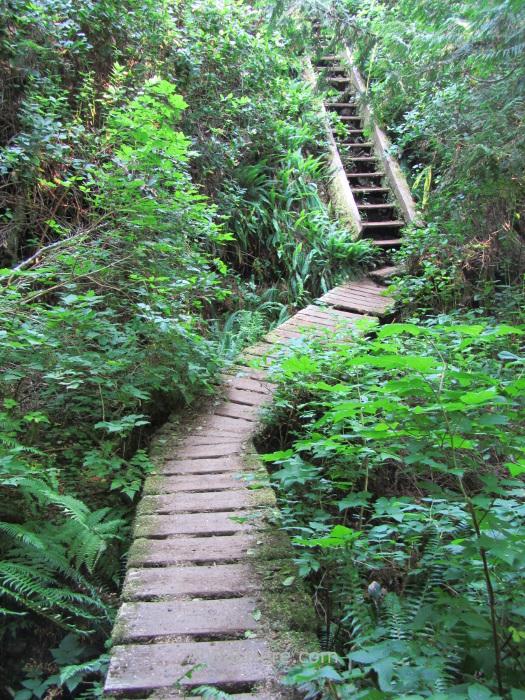JUAN DE FUCA 37. Escaleras, Marine Trail, Isla de Vancouver, Columbia Britanica, Canada. British, Island. Stairs