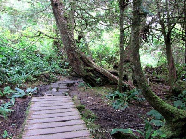 Juan de fuca 4. Botanical Beach. Marine Trail, Isla de Vancouver, Columbia britanica, Canada. Island, British.