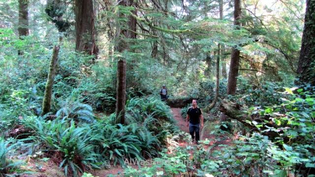 Juan de Fuca 7. bosque humedo Marine Trail, Isla de Vancouver, Columbia Britanica, Canada. British, Island rain forest