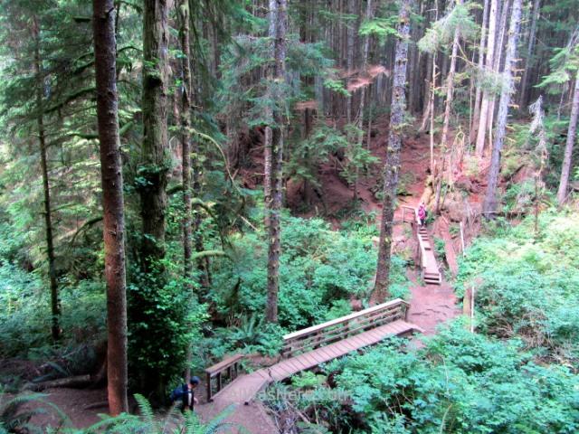 Juan de Fuca 7. bosque Marine Trail, Isla de Vancouver, Columbia Britanica, Canada. British, Island forest