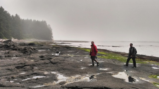 Juan de fuca 7. Botanical Beach. Playa Marine Trail, Isla de Vancouver, Columbia britanica, Canada. Island, British.