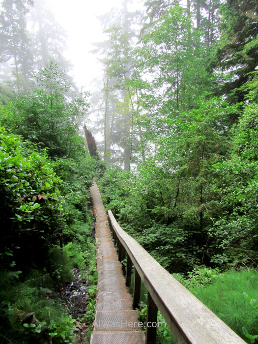 Juan de Fuca 8. pasarela hecha con un tronco, Marine Trail, Isla de Vancouver, Columbia Britanica, Canada. British, Island gangway made of a trunk