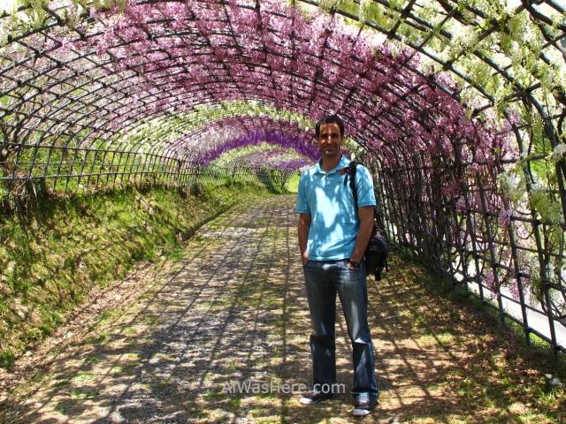 Kawachi Fujien 7. Tunel glicinias. Kitakyushu, Japon. Wisteria tunnel, Japan. Alwashere