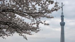 Flores y la Sky Tree