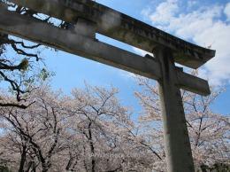 Cerezos en flor en un templo menor en Asakusa