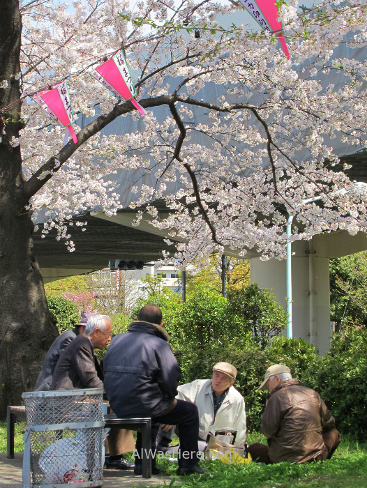 Sakura Hanami 25. Flores cerezo parque Sumida Tokio Japon. Cherry blossoms park Tokyo Japan