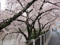 Paseo junto al Chidorifugachi