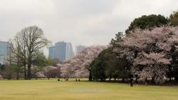 Los edificios modernos de Shinjuku se ven desde el parque