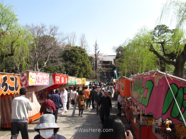 Sakura Hanami 8. Flores cerezo parque Ueno Tokio Japon. Cherry blossoms park Tokyo Japan