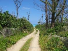 El camino desde el camping de Ooganeku Beach hasta la playa