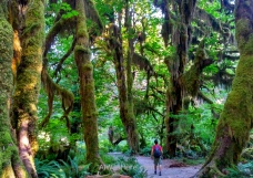 Hoh Rainforest, Parque Nacional Olympic