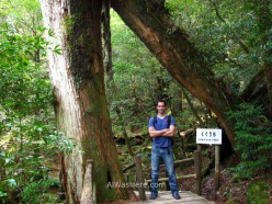 Bajo el Kugurisugi