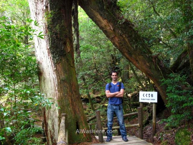 Yakushima 12. Alwashere y Kugurisugi, Yakusugi Land, Kyushu Japon Japan