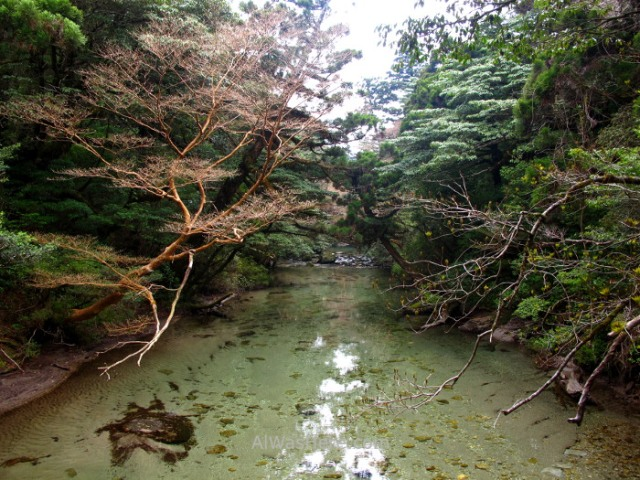 YAKUSHIMA 17. Miyanoura mountainTrail, Japon. Japan (2)
