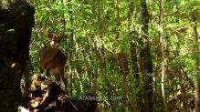 Un ciervo en el Arakawa Trail
