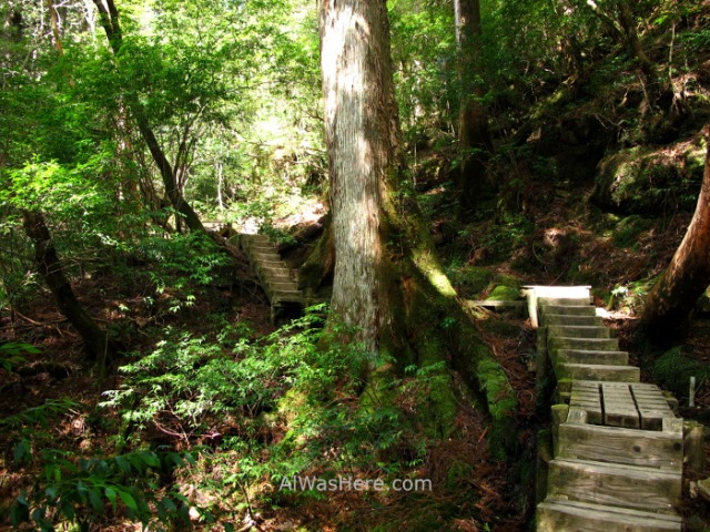 YAKUSHIMA 7. escaleras en Ohokabu Trail, Japon. stairs Japan