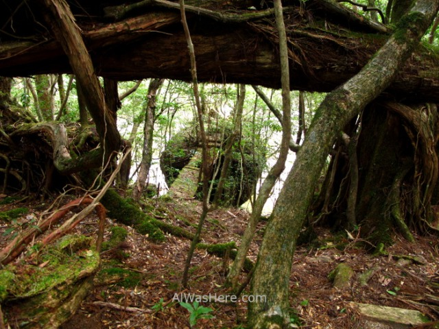 Yakushima 9. Yakusugi Land, Kyushu Japon Japan