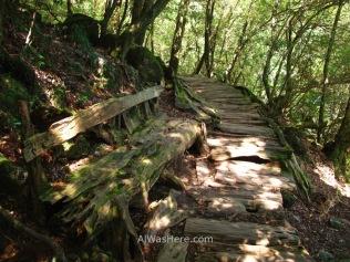 Un antiguo banco de madera devorado por la naturaleza
