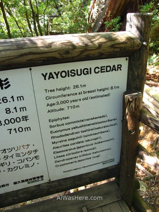Yakushima Shiratani Unsuikyo 2. Yayoisugi, Miyanoura, Japon. Japan. Momonoke Hime.