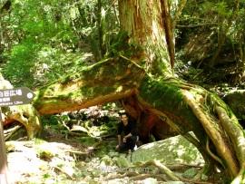 Bajo las tres patas del Sanbon-ashisugi