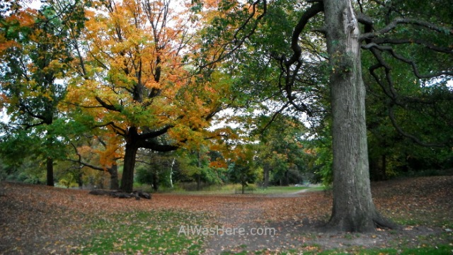 Nueva York running 20. Prospect Park, New York City