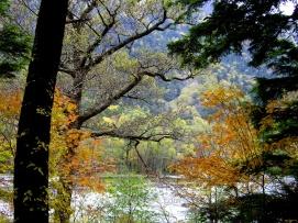 Bosque otoñal y el río Azusa en Kamikochi