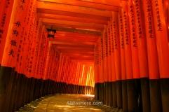 Túnel formado por múltiples toriis en el Fushimi Inari Taisha, Kioto