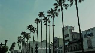 Palmeras en una avenida de Miyazaki